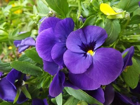 purple-739346__340